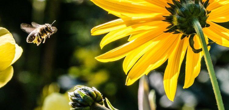 Satsning ska gynna vilda pollinatörer